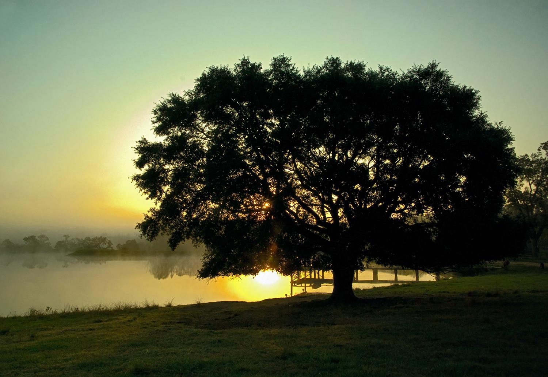 Kirbs Oak