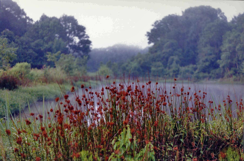 Louisiana Catfish Pond